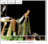 jGallery images lightbox jQuery