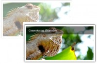 simple CSS3 Slick Animated Image Caption